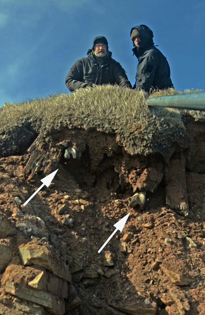 Dag og Arild dokumenterer graven før åpning. Lårbein og plankebord stikker ut av erosjonskanten. Hverken kne, leggbein. føtter eller støvler ble funnet i røysa under klippen.  (Foto: (Foto Dag Nævestad/ Sysselmannen på Svalbard))