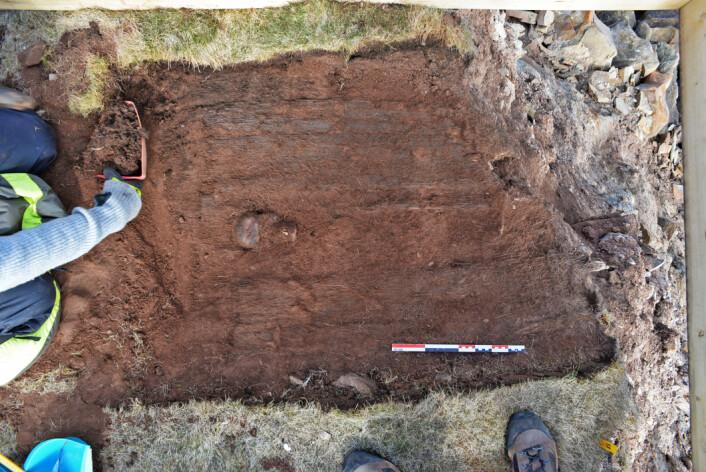 Her er plankelaget som dekker graven under opprensing. Skallen stikker frem i en glipe som har oppstått når bordene har seget nedover og blitt tvunget ut til gravens sider. Bredden på graven er her rundt 80 cm, dette er veldig bredt. Vi klør oss i hodet og lurer fælt på om det kan ligge flere individer i graven.  (Foto: (Foto Dag Nævestad/ Sysselmannen på Svalbard))