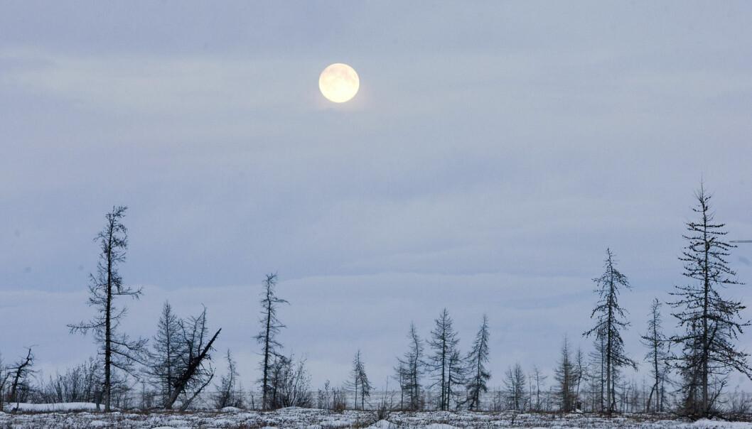 10–15 prosent av jordas landoverflate er tundra. Mye av vegetasjonen i disse områdene holder seg tett til bakken, for å beskytte seg mot kald vind. Her  ser du fullmånen over Jamalhalvøya nordvest i Sibir. (Foto: Vasily Fedosenko, Reuters)