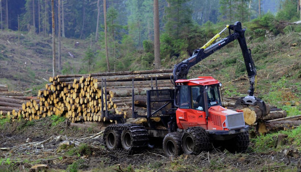 Hogstmaskinen er koblet til internett, som gjør at den oppdaterer seg hele tiden på priser på tømmer av ulike kvalitet flere ganger om dagen. Hogstmaskinføreren arbeider alene og styrer mer enn ti elektrohydrauliske operasjoner på hver joystick.  (Foto: Morten Günther)
