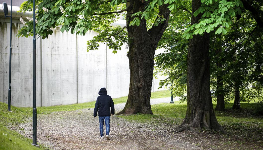 Det er massevis av grøntområder og trær i Oslo sentrum. Kanskje disse har en uventet effekt på hvor sunne folk føler seg? (Foto: Gorm Kallestad/NTB Scanpix)