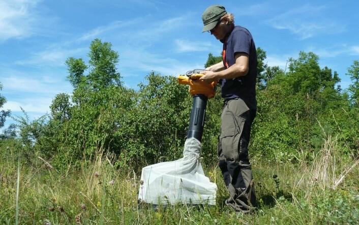 Spesialutviklet insektstøvsuger samler småkryp.  (Foto: Anders Endrestøl)