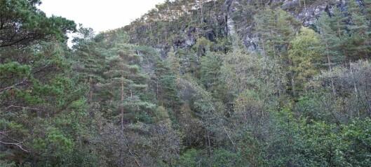 Visste du at vi har regnskog på Vestlandet?