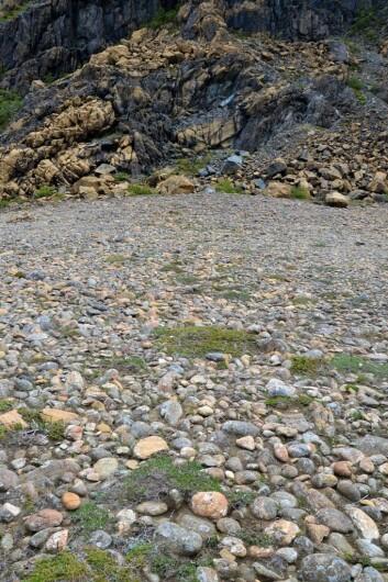 Støypet ser ut som en sal. Strandvollen er dekket av godt formede rullesteiner, rundet av havet som slo inn fra begge sider for flere tusen år siden.  (Foto: Gudmund Løvø)