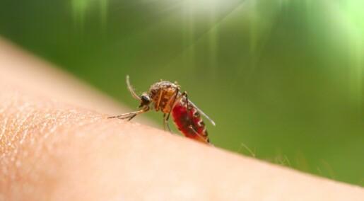 Spør en forsker: Hett tips mot kløende myggstikk
