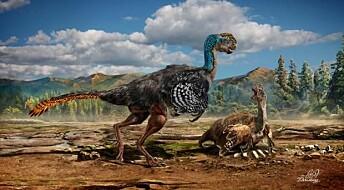 Ny fjærkledd dinosaur funnet i Kina