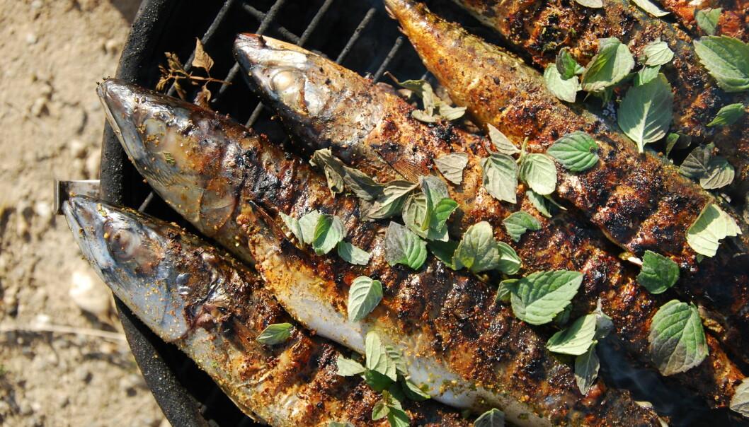 Forskerens miljøvennlig grilltips er å grille mer fisk, for eksempel makrell. (Foto: Microstock)