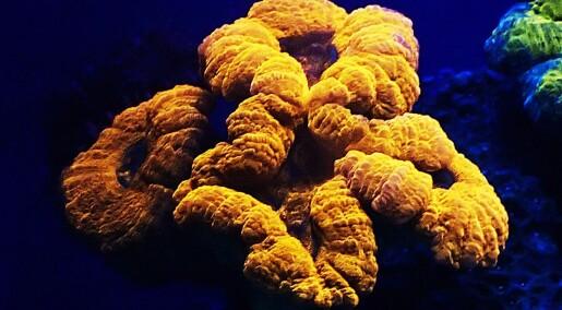 Fant fargefest på dypet av Rødehavet