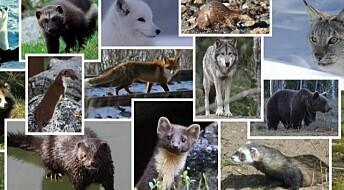 Nytt fra akademia: Norske rovdyr nå på nett