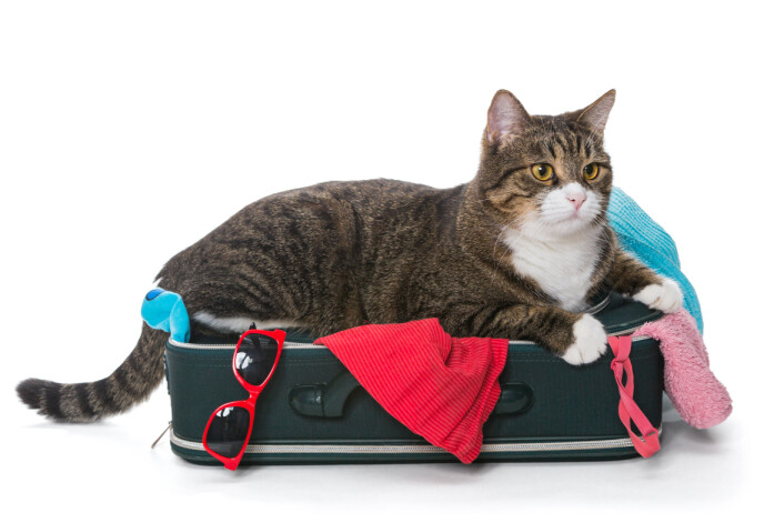 Katter er sårbare for miljøskifter. Den kan bli frustrert og redd av å være i et nytt miljø. I ferien foretrekker den sannsynligvis å være hjemme, men med tilsyn. (Foto: Colourbox)