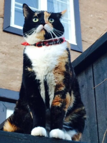 Katter bør ha med mennesket sitt utendørs i nye omgivelser de første gangene.  (Foto: Anne Lise Stranden/forskning.no)