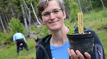 Skal redde truet norsk orkidé
