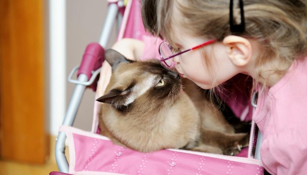 Katten din bærer kanskje rundt på en parasitt som kan gi deg schizofreni og tvangslidelser. (Foto: Colourbox)