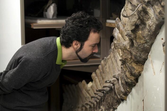 Fossilene forsker Sergio Bertozzi og kollegene hans har undersøkt, har vært lagra i over hundre år. (Foto: Handout/Reuters)