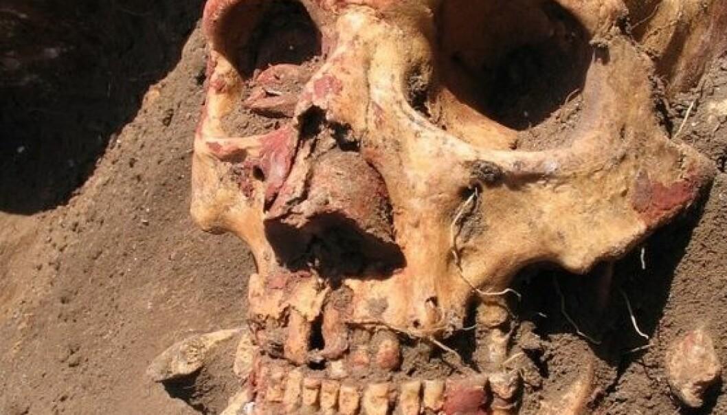 To forskarteam har studert DNA frå 170 førhistoriske menneskeskjelett. Eitt av dei er denne hovudskallen frå jamnakulturen i Russland. (Foto: Natalia Shishlina)