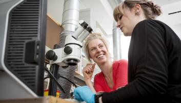 Professor Gro Amdam (i rødt) fikk seg en ubehagelig overraskelse da hun var doktorgradsstudent: Det fantes viktig informasjon på feltet hun jobbet med som aldri var blitt offentliggjort. I dag deler hun gjerne erfaringene sine med nye doktorgradsstudenter, som finske Franziska Dickel. (Foto: Håkon Sparre, NMBU)