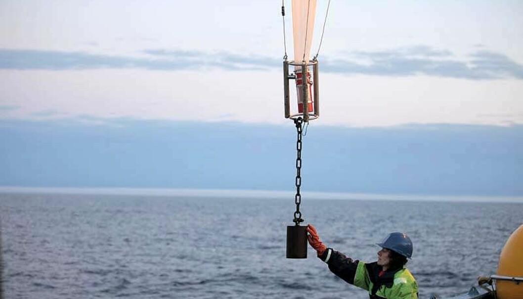 En av forskerne setter ut nett for å samle opp alger. Bildet er tatt fra feltarbeidet som ble gjort høsten 2013 i Polhavet med forskningsskipet Lance.  (Foto: Amy Cooper, Woods Hole Oceanographic Institute)