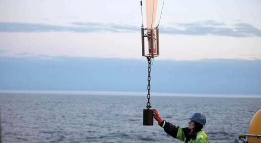 Nytt fra akademia: Leter etter stoffet som gir liv til plankton