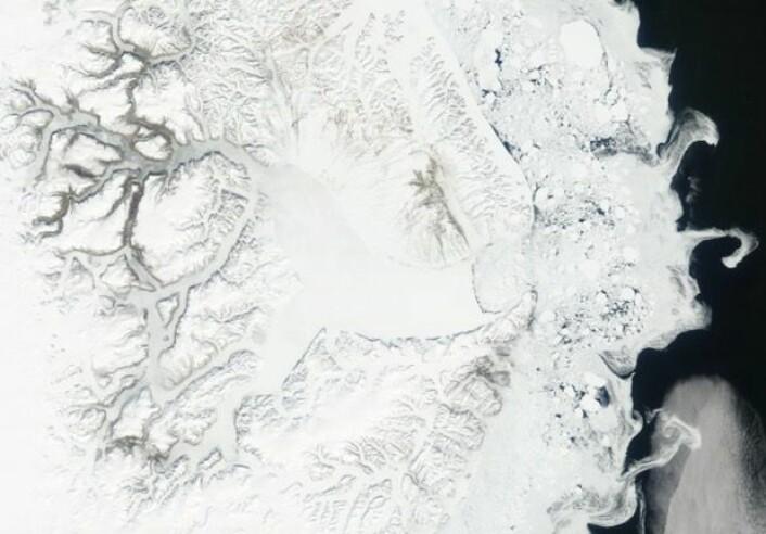 Et fortsatt snø- og isdekket Scoresby Sund på Grønland, sett fra NASAs satellitt Terra 5. juni. (Bilde: NASA Terra MODIS)
