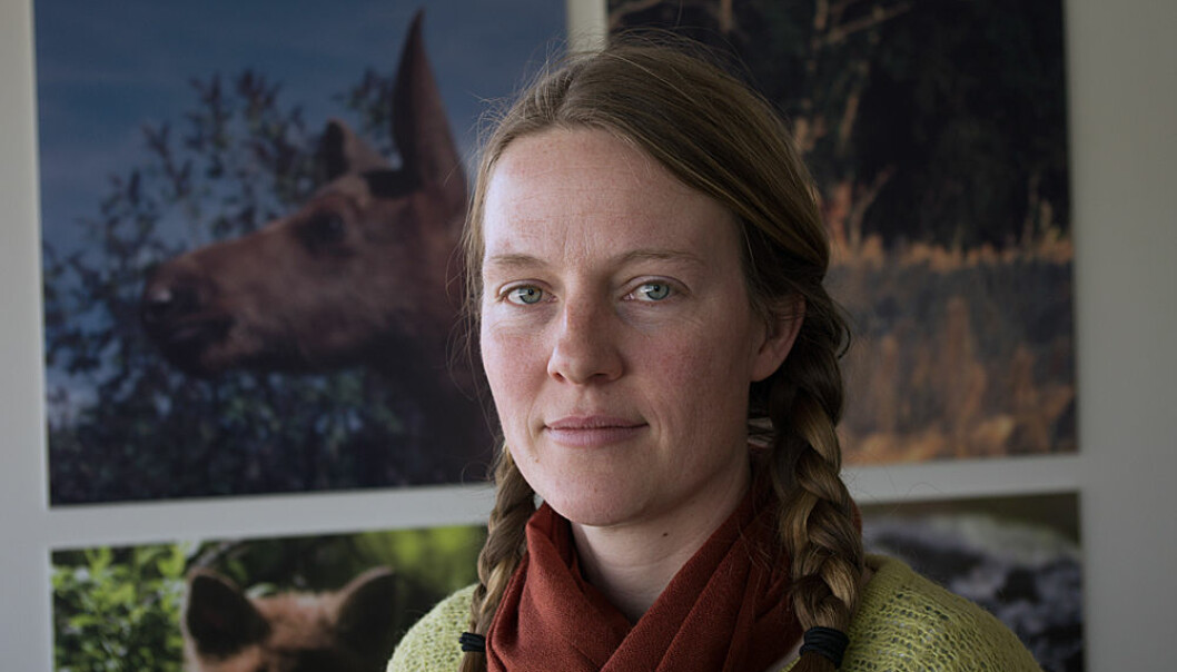 Skogbruket produserer ikke like mye mat til elgen lenger, forteller Karen Marie Mathisen. (Foto: Georg Mathisen)