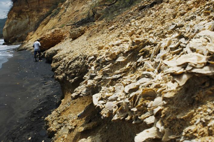 De siste 23 millioner årene har planeten sett ganske lik ut. Disse sedimentene på Jamaica inneholder fossiler som er mellom to og fem millioner år gamle. (Foto: Aaron O'Dea)