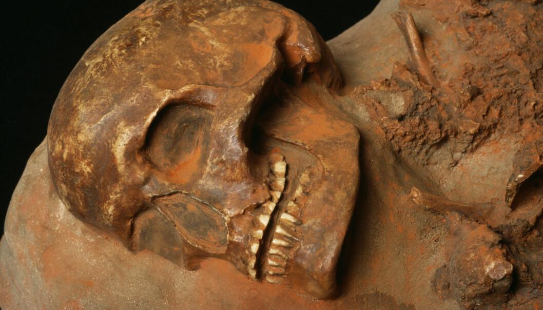 En Cro Magnon-hodeskalle fra Tsjekkia. Dette skal ha vært det første anatomisk moderne mennesket som levde i Europa, og kom hit for rundt 45 000 år siden. (Foto: Science Photo LIbrary)