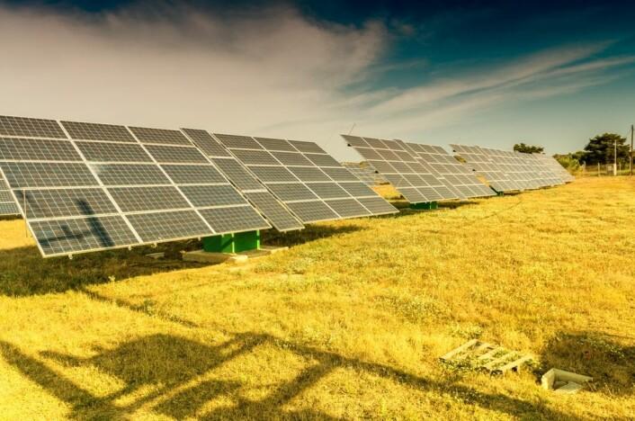 Dagens solcellepaneler kan få en oppgradering med bakterieskapte fargestoffer fra planter. Fargestoffene kan brukes som lysfangere i solcellepanel. (Foto: Colourbox)