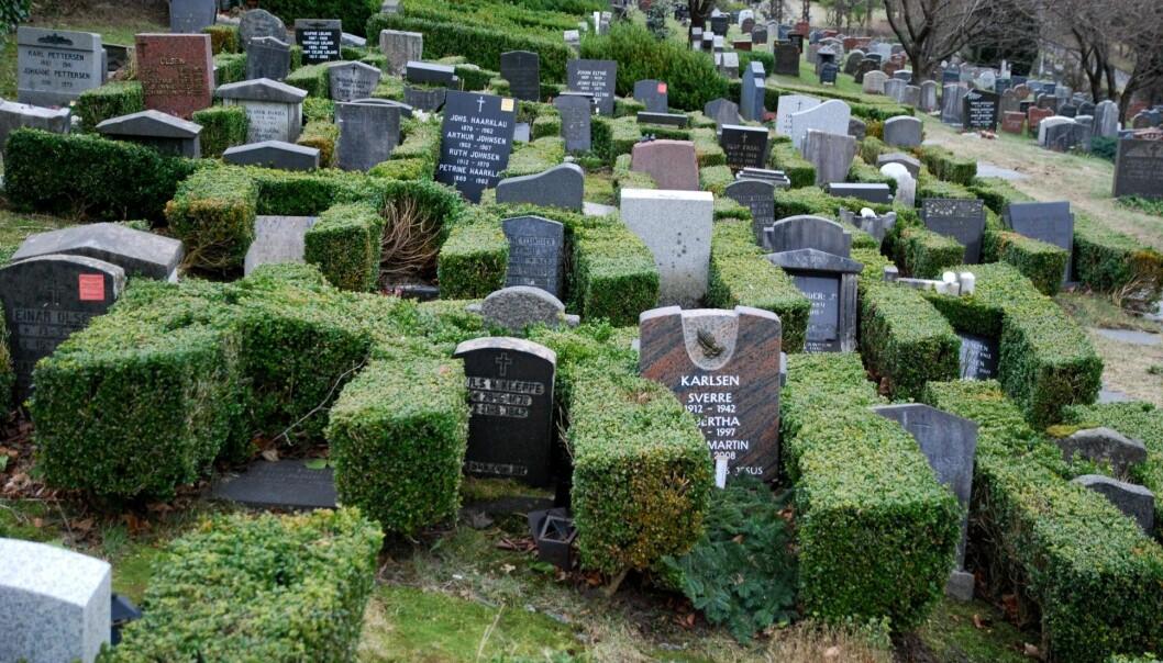 Naturen og landskapet rundt har også stor betydning for hvordan gravplassen blir utformet. Her fra Solheim gravplass i Bergen, der hekken har tilpasset seg større og større gravstøtter. (Foto: Rannveig Søndergaard Holm)