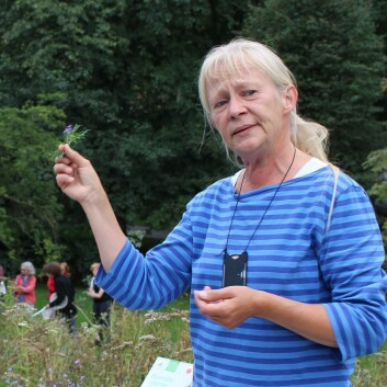 Kristina Bjureke ved Naturhistorisk museum i Oslo har i mange år forsket på naturmangfold, og sjeldne og truede arter i norsk natur.  (Foto: Dag Inge Danielsen)