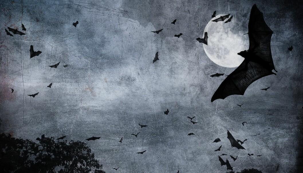 Om natten blir flyturen til flaggermusene mer omstendelig enn på dagen (Foto: Microstock)