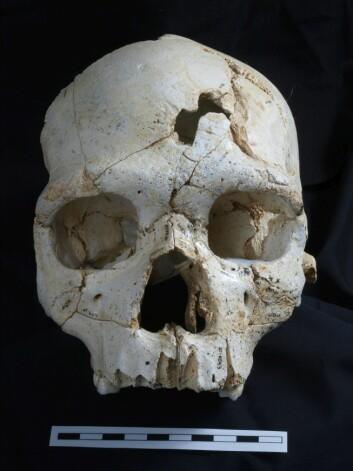 Her ser du hodeskallen i sin helhet. (Foto: Javier Trueba, Madrid Scientific Films)