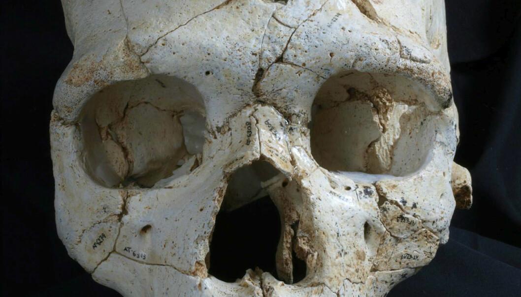 Hodeskallen med navnet Kranium 17 har to dype hull over det venstre øyet. Mord, mener forskere. ( Foto: Javier Trueba, Madrid Scientific Films)