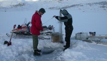 Vinterfiske for å skaffa materiale til måling av radiocesium. (Foto: John Brittain, NHM)
