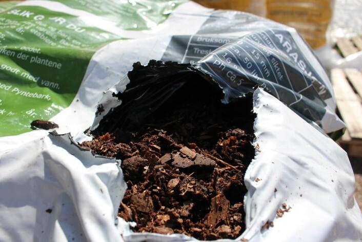 Furu pyntebark kan blandes i kompost for å få en mer luftig struktur i jorden.  (Foto: Dag Inge Danielsen)