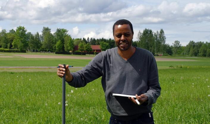 Alemayehu Kidane er en av pionerene på bruk av sikori som beiteplante i Norge. (Foto: Åshild T. Randby)