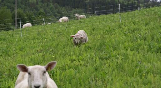 Fôrer lam med eksotisk salat