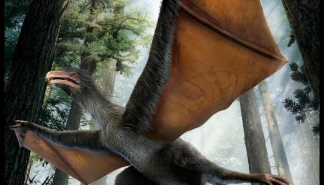 Vingene til «Yi qi» ligner ikke noe av det man har funnet hos dinosaurer. De minner mer om vingene til flaggermus og flygeekorn.  (Foto: Nature)