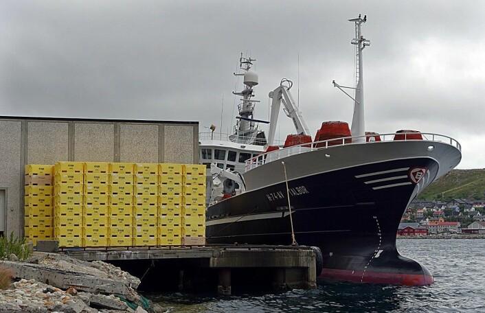 """""""Talbor"""" fra Austevoll leverer snøkrabbe i Kjøllefjord sist sommer. Mer enn 20 båter fra EU, Russland og Norge deltok i snøkrabbefisket i 2014, og det forventes fangster på cirka 10.000 tonn i 2015.   (Foto: Gunnar Sætra/Havforskningsinstituttet)"""