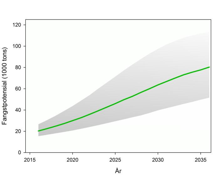 Modellberegnet fangstpotensial for snøkrabbe i hele Barentshavet (grønn markerer middelverdi og det grå arealet usikkerhet i beregningene). (Foto: (Illustrasjon: Havforskningsinstituttet))
