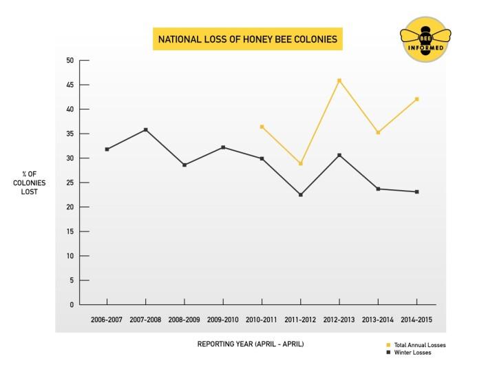 Den svarte grafen viser hvor mange prosent av bikoloniene som har kollapset i løpet av vinteren over flere år. Den gule grafen viser hele året. (Foto: Bee Informed Partnership/University of Maryland/Loretta Kuo)