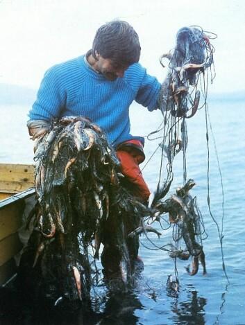 På begynnelsen av 1980-tallet var røyebestanden i Takvatnet enorm, og dominert av små og sterkt parasittert fisk. (Foto: UiT)