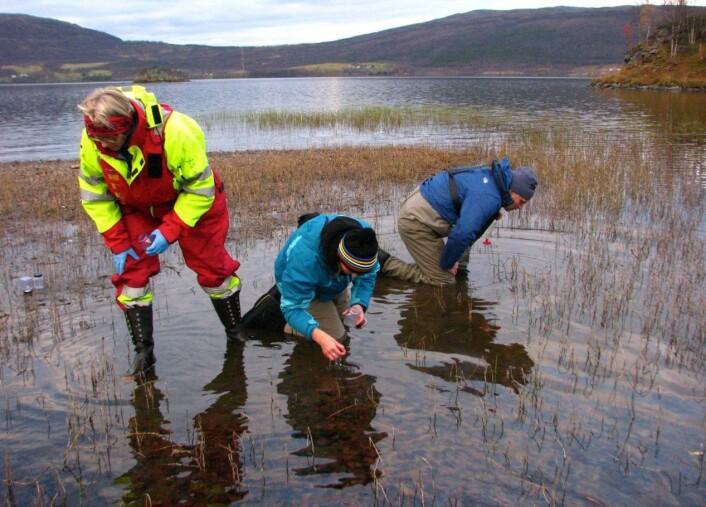 Konsentrerte og engasjerte biologer samler inn og dokumenterer diverse dyr i strandsona i Takvatnet. (Foto: UiT)