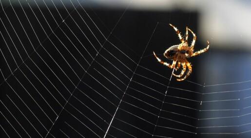 Edderkopper bruker spindelvevet kreativt