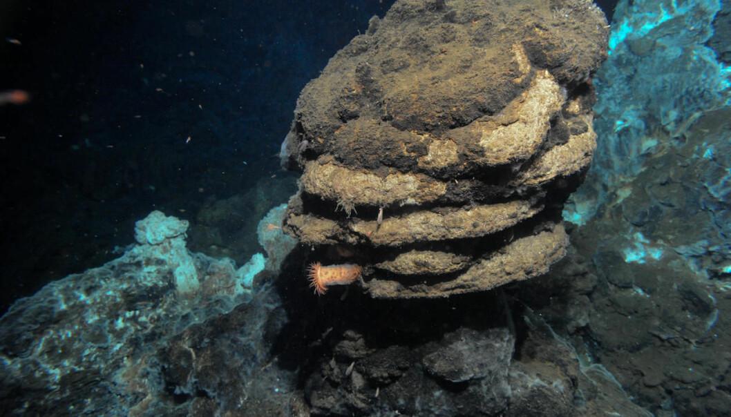 Det var rundt en undersjøisk vulkan som denne at en internasjonal forskergruppe fant den nye mikroorganismen under et tokt med forskningsfartøyet G. O. Sars i Norskehavet. (Foto:  Senter for geobiologi, UiB)