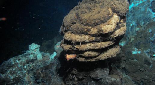 Fant manglende mellomledd i Norskehavet