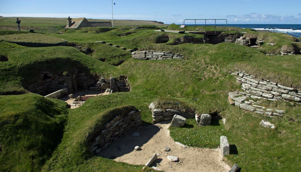 Slik bodde folk på Orknøyene for 5000 år siden. Steinalderbosetningen Skara Brae er så godt bevart at den omtales som «Skottlands Pompeii». Nå viser det seg at orknøyingene fremdeles bærer på uventet mye DNA fra folkegruppene som bodde på øyene før vikingene kom. (Foto: Georg Mathisen)
