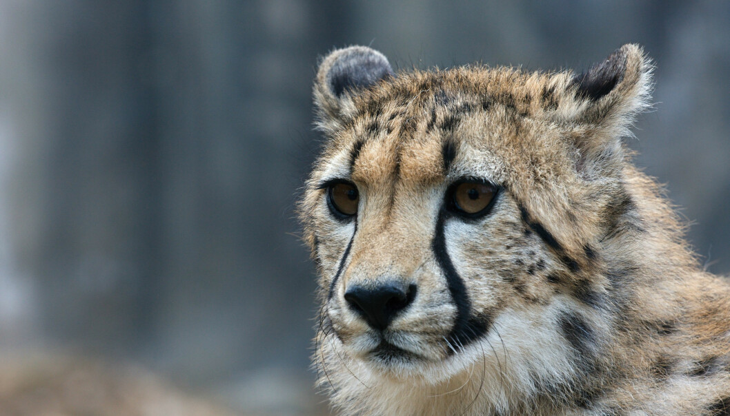 Kan ville dyr ha psykiske lidelser?