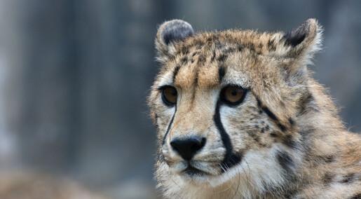 Spør en forsker: Kan ville dyr ha psykiske lidelser?