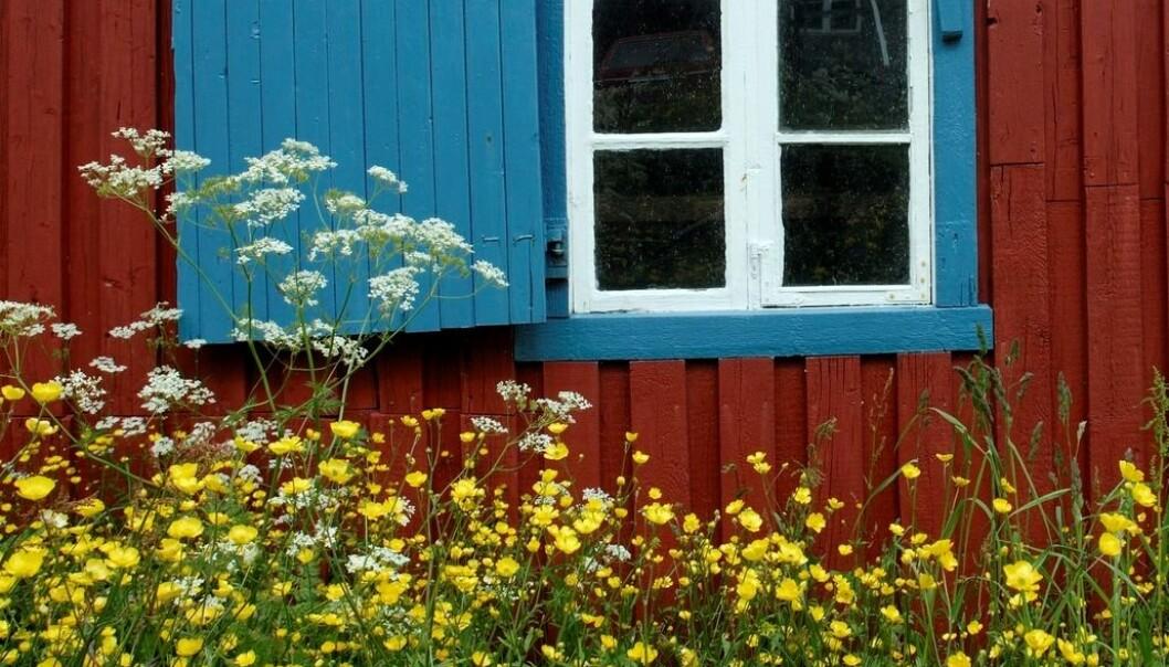 Har du lyst på blomstereng i hagen? Og samtidig gjøre noe bra for insekter og artsmangfoldet? Her får du rådene. (Foto: Samfoto)