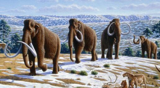 Ny teori: Mammuten døde ut på grunn av innavl